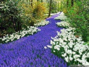 The Infinite and Eternal Garden